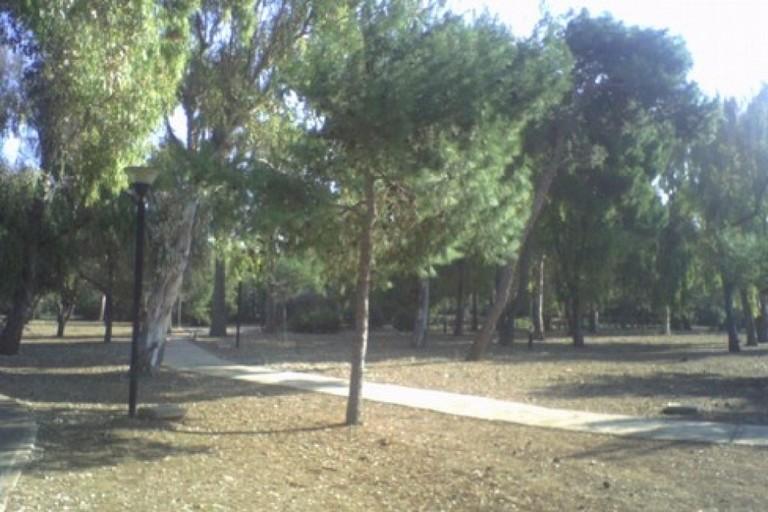 La pineta di San Francesco