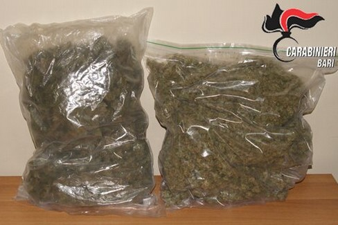 marijuana casamassima