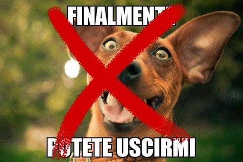 Il meme di Francesco Torluccio