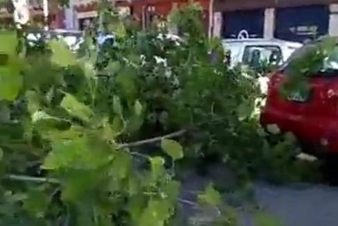Il ramo caduto in corso Mazzini