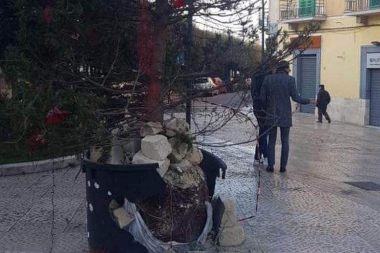 albero di natale distrutto a gravina