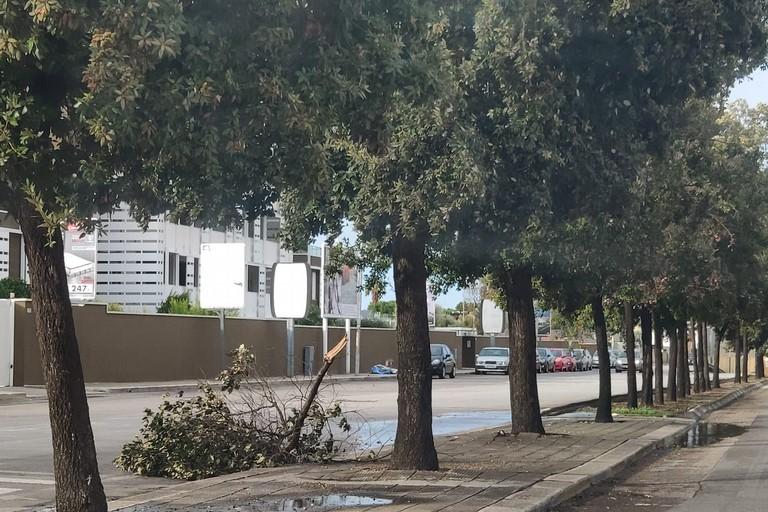 Un albero spezzato