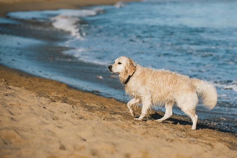 Un cane in spiaggia