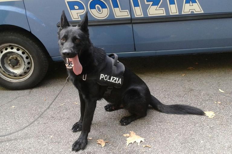 Un cane poliziotto
