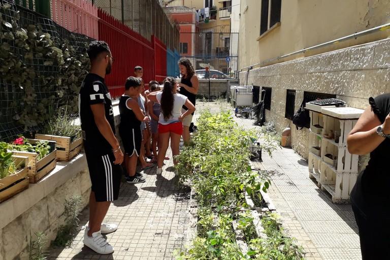 Orto Sociale. <span>Foto Guerino Amoruso</span>